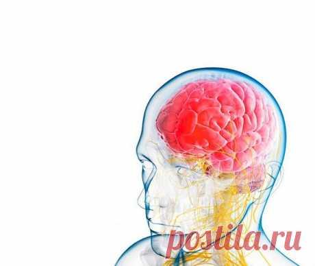 Продукты для здоровья мозга Некоторые полагают, что животный жир вреден для организма, но на самом деле он способствует лучшему всасыванию питательных веществ, укрепляет иммунную систему и поддерживает другие важные функции орга...