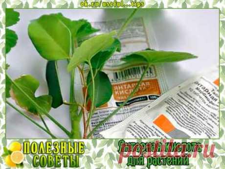 Ваше любимое комнатное растение начало увядать? Вы переживаете, что вскоре придется его выбросить? Используйте это копеечное аптечное средство и радуйтесь цветущему комнатному растению, которое ещё вчера казалось безнадежным.