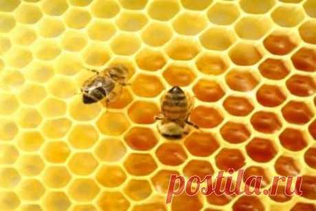 Эспарцетовый мёд: полезные свойства