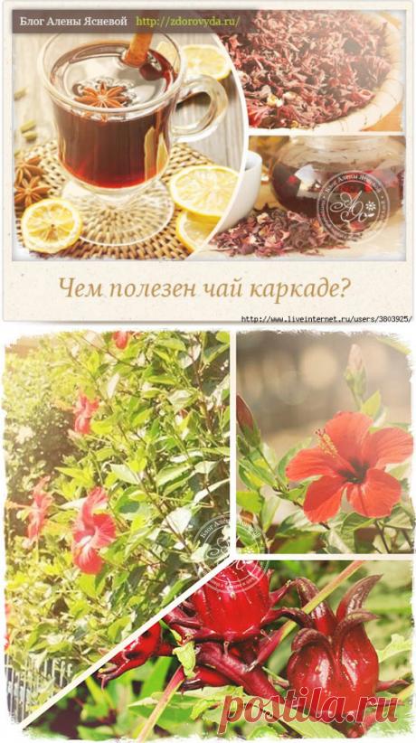 Каркаде — уникальные полезные свойства чая из суданской розы. Применение и рецепты