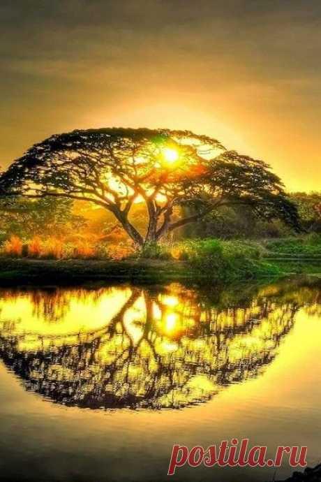 ...Как бы не начался твой день, с дождя или с солнца, Будь благодарен... Твой День Начался!...... С добрым утром, новый день!