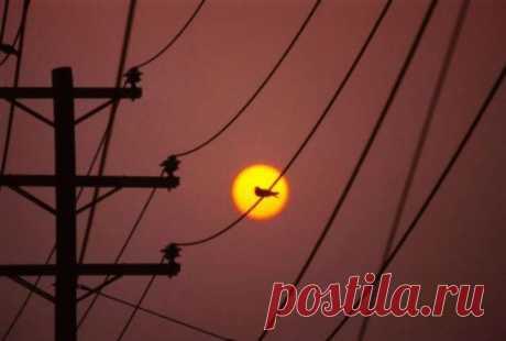 Почему птиц, сидящих на высоковольтных проводах, не ударяет током? Если, подняв голову, взглянуть на линии электропередач, несущие в себе несметное количество вольт, невольно складывается впечатление, что перед вами своеобразная адская печь, способная заживо зажарить любую птицу, севшую на смертоносный кабель, в миллисекунду. В действительности же этого не происходит.