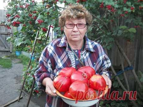 """Los secretos de tomate rápido sozrevaniya.\u000a\u000aLa partida. «Quieres criar — sobrealimenta», aquí mi regla. Comienzo a sobrealimentar a través de 2 nedeliposle los desembarcos de las plantas de tomate. \u000aLa fertilización repito cada 2 semanas hasta el medio del agosto.\u000a\u000aQue los frutos cerca del tomate serían más en grande y maduraban más rápidamente.\u000aQue cerca de los tomates los frutos sean más en grande y maduraban algunos días antes, preparo para ellos tal \""""bebida\"""" - en 10л las aguas añado 3-4 gotas del yodo. \u000aRiego bajo la raíz una vez a la semana, gastando hasta 2л en..."""
