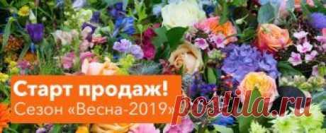 Купить саженцы, луковицы, корневища в России, заказать дешево почтой в интернет-магазине растений Procvetok.ru