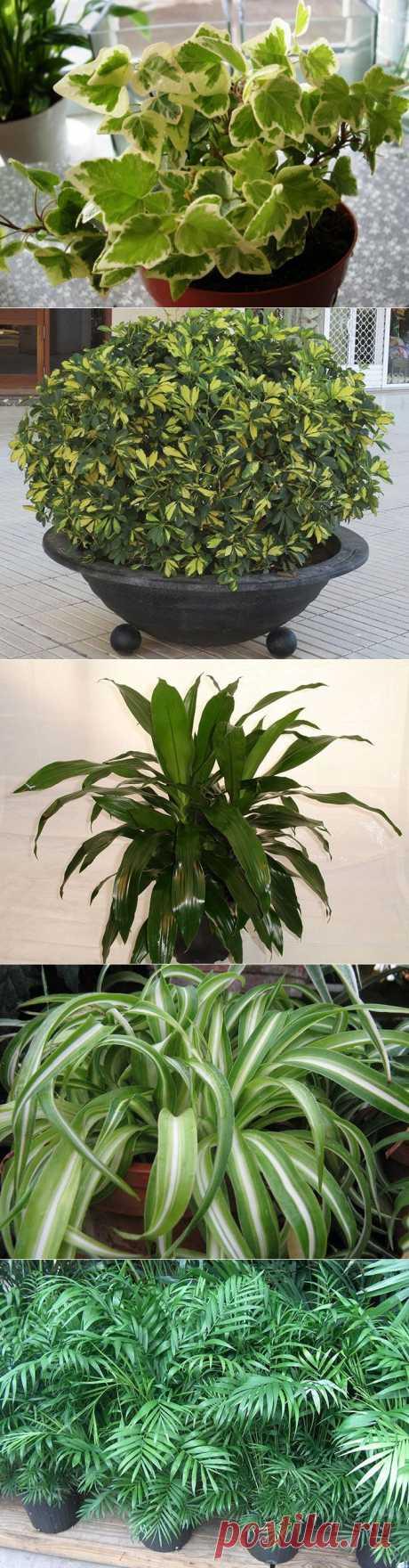 Комнатные растения которые хорошо очищают воздух и не требуют особого ухода!