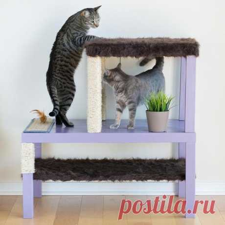 How to make an entertainment complex for a cat with own hands