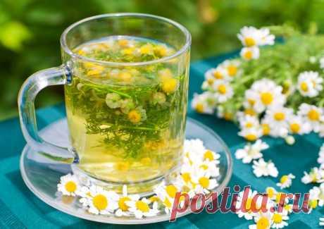 Вот почему наши бабушки обожают ромашковый чай: 15 целебных свойств - Образованная Сова