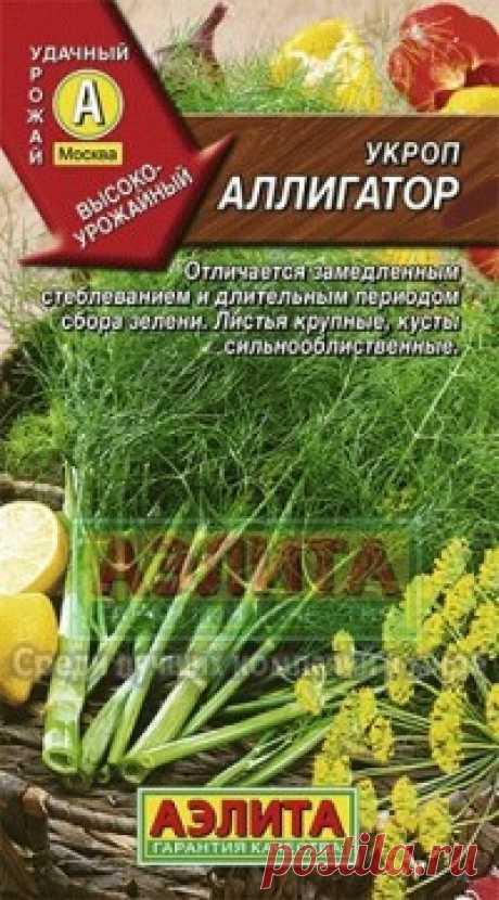 """Семена. Укроп """"Аллигатор"""" (вес: 3 г) Всхожесть: 66%. Высокопродуктивный сорт, от всходов до уборки на зелень – 42-45 дней. Отличается замедленным стеблеванием, что позволяет продлить период использования зеленой массы. Растения компактные, сильнооблиственные, высота в фазе цветения до 160 см. Масса одного растения при уборке..."""