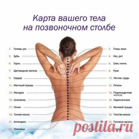 БОЛЬ ОТДЕЛЬНЫХ ПОЗВОНОЧНИКОВ И ЧТО ЭТО ОЗНАЧАЕТ:  Первый шейный позвонок (С 1, атлант): Головные боли, мигрень, ослабление памяти, хроническая усталость, головокружение, артериальная гипертензия, недостаточность мозгового кровообращения.  Второй шейный позвонок (С 2, осевой позвонок)  Воспалительные и застойные явления в придаточных пазухах носа, боли в области глаз, ослабление слуха, боли в ушах.  Третий шейный позвонок (С З)  Лицевые невралгии, шум, свист в ушах, угри и ...