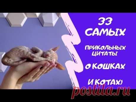 33 прикольных цитаты о котах + видео моей кошки Буси