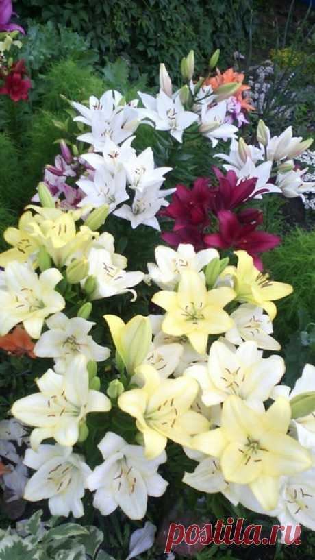 Мой цветочный рай .....🌺🌹🌺🌹🌺