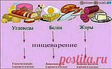 Здоровое питание основано на трех незыблемых принципах: разнообразии, сбалансированности, умеренности: https://15.ak-pitaniya.com/