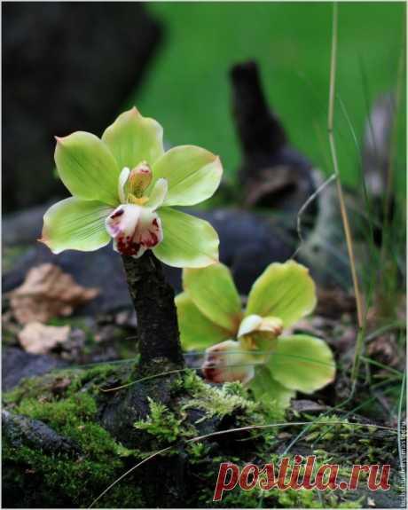 Лепка орхидеи цимбидиум из полимерной глины | Журнал Ярмарки Мастеров