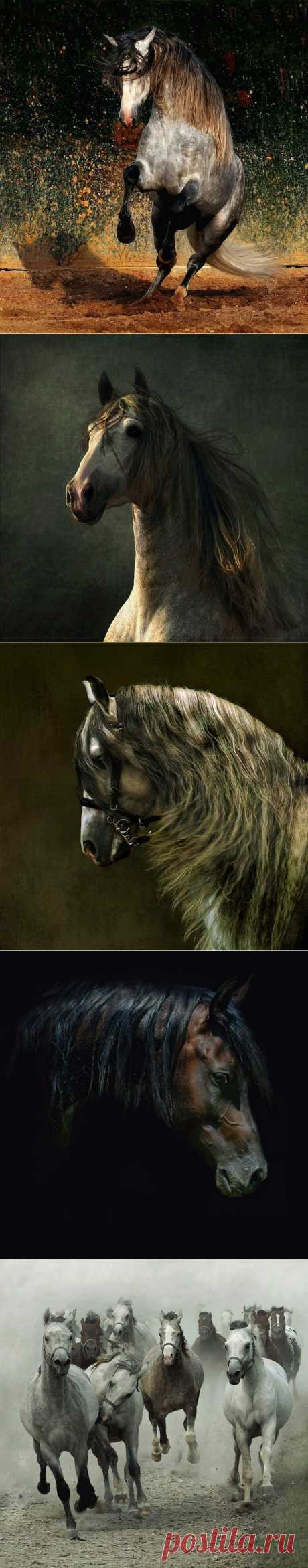 Арабские скакуны. Красивывые фото лошадей... (30 фото) | PulsON — все самые интересные события в мире.