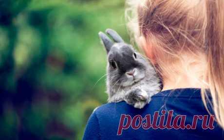 Имена для кроликов: как назвать девочку и мальчика При выборе клички для кролика учитывают внешность, особенности характера питомца, месяц рождения. Можно назвать животное именем человека, у которого оно было куплено, или по первой букве прозвища отца.