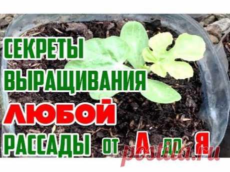 Las plantas hortalizas de Y hasta Mí \/ las plantas Sanas - la base de la cultivación de las plantas en un vídeo