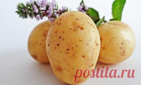 10 рецептов оригинальных блюд из картофеля