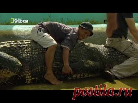 Nat Geo Wild: Охота на гигантского крокодила (1080р)