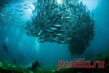 Подводный мир!!!