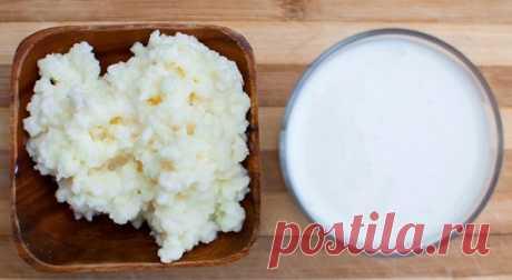 Молочный гриб: польза и вред, отзывы врачей и пациентов