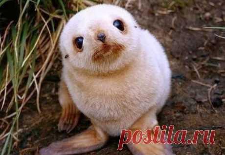 На эту подборку невероятно милых детенышей животных невозможно смотреть без улыбки