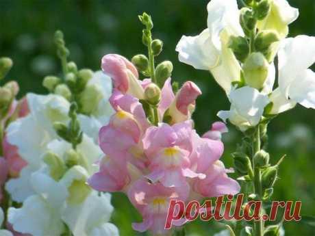 Какие цветы посадить на даче, чтобы цвели все лето - Самоцветик - медиаплатформа МирТесен
