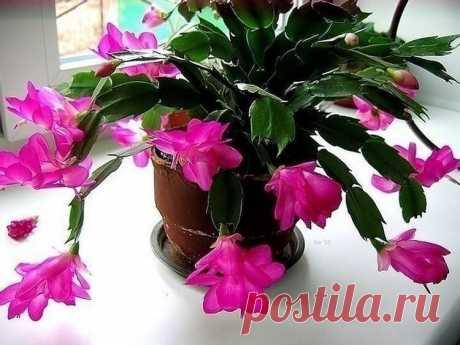 Маленькая хитрость: чтобы цветы в доме цвели пышно и долго Давно ли Ваш любимый цветок цвел, как в магазине цветов, не помните?... - Все самое интересное! Давно ли Ваш любимый цветок цвел, как в магазине цветов, не помните?...