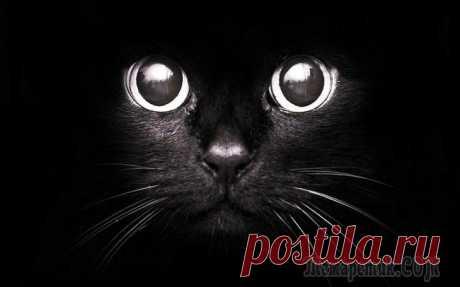 Народные приметы и суеверия о кошках Кошки являются самыми популярными домашними животными. Они обладают своенравным характером и острым зрением, что позволяет им видеть в темноте. Эта особенность и наделила пушистых любимиц почти мистич...