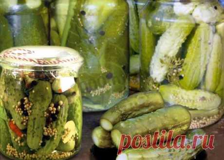 Los pepinos en salmuera con la mostaza para el invierno