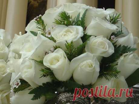 Белые розы фото 45 шт.