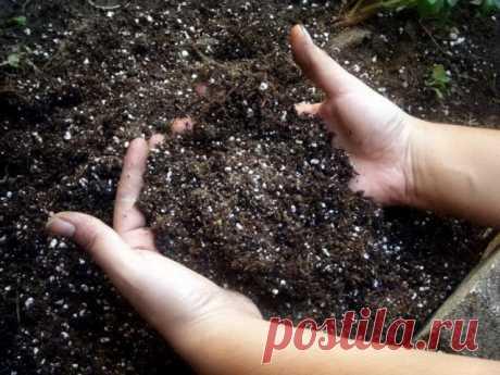 La acidez del suelo — como determinar y raskislit