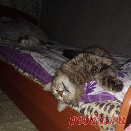 Лапы вверх:) Подборка милых и смешных котиков   Кошка в доме   Яндекс Дзен