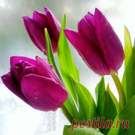 ✔🌱✔Пусть будет новый день  Наполнен красотой!   Улыбками!    Теплом!     Хорошими делами! Пусть вера и надежда с добротой, Всегда идут одной дорогой с Вами!      ˙·•●ღ♡ܓ