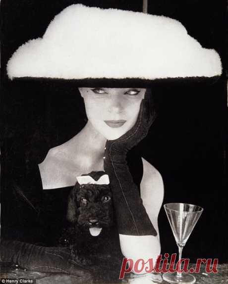 Miniature Poodle, Vogue Fashion   Vogue 1954, Photo by Henry…  
