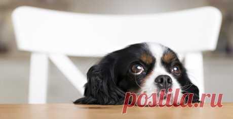 Собаки оказались способны понимать смысл человеческой речи / Новости / Моя Планета