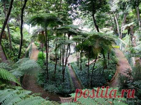 Тропический сад дворца Монте - о.Мадейра Португалия.