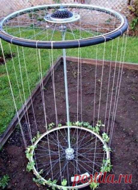 Из старых велосипедных колес или ободов можно соорудить замечательную вертикальную грядку для огурцов или зеленого горошка, например