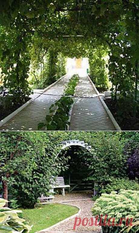 Берсо и процесс его создания. Берсо (от французского – беседка) выглядит как каркас, созданный из вертикальных опор и перекладины над садовой дорожкой. К этим перекладинам подвязываются ветви и стволы высаженных вдоль дорожки деревьев, которые со временем образуют зеленый живой тоннель, соединяющий между собой части сада.