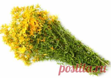 Зверобой – волшебная трава | Женские секреты Убивает наповал плохое настроение и даже легко справляется с депрессией, потому что активно стимулирует выработку гормона счастья ( серотонина ) в