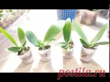 Кто виноват в гибели орхидей? Как и в каком состоянии они попадают к нам? И многое другое...