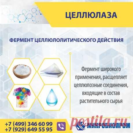 Целлюлаза - фермент катализирует гидролиз бета(1,4)-гликозидных связей в целлюлозе с образованием глюкозы или дисахарида целлобиозы. Целлюлаза расщепляет молекулу целлюлозы на моносахариды (простые сахара), такие как бета-глюкоза, или более короткие полисахариды и олигосахариды. Целлюлаза является ферментом широкого применения и эффективно используется в технологических процесса различных отраслей: производство спирта и пива, хлебобулочных изделий, синтетических моющих средств.
