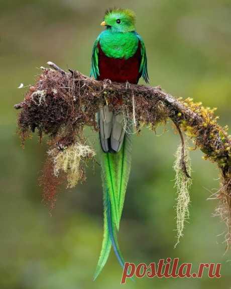 Красочные фотографии обитателей тропических лесов Коста-Рики