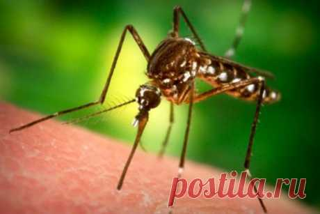 10 убийственных ароматов от комаров: