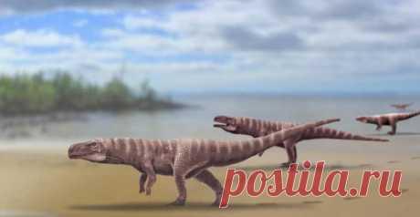 По Азии ходила на задних лапах крокодила Сегодня крокодилы обитают в тропических районах Азии, Африки, Австралии и в Северной и Южной Америке, но за 200 миллионов лет своего существования на Земле они изменились.Современные крокодилы достига...