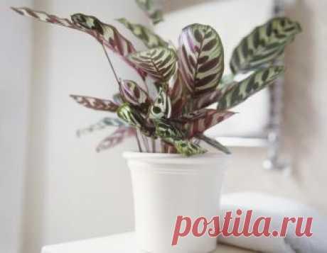10 удивительных комнатных растений, которые обожают темноту! В настоящее время мало кого можно удивить красивыми и необычными комнатными растениями. И каждая уважающая себя хозяйка старается наполнить свой дом зелеными «питомцами», чтобы очистить воздух...