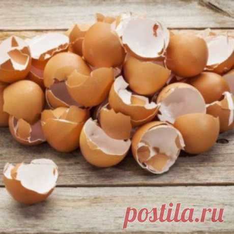 That is why I ceased to throw out an egg shell! I turn it into something tremendous …