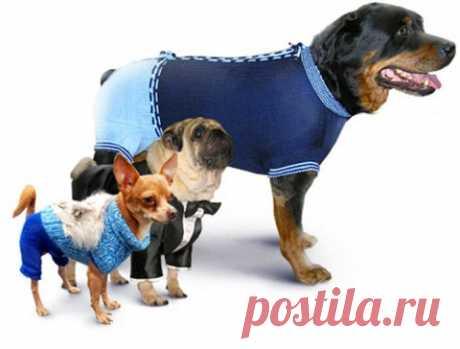 Вязаная одежда для собачек. (выкройки и схемы вязания) » Женский Мир