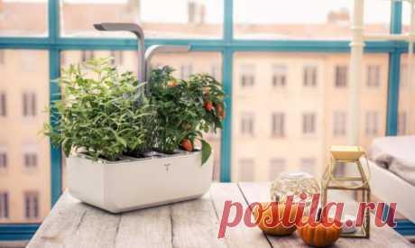Какие цветы держать дома и для чего они пригодятся — Полезные советы