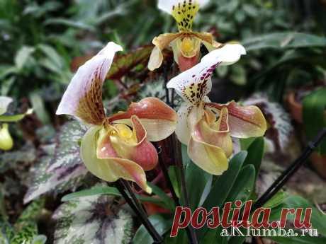 Красивые цветы 120 фото, красивые букеты, картинки