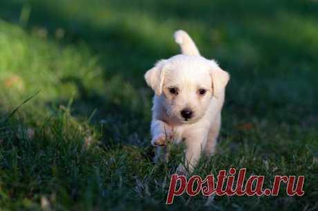 17 пород собак для содержания в небольших домах и квартирах